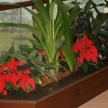 j-holiday_plants_fpo1