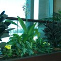 l-interior_plants_fpo3