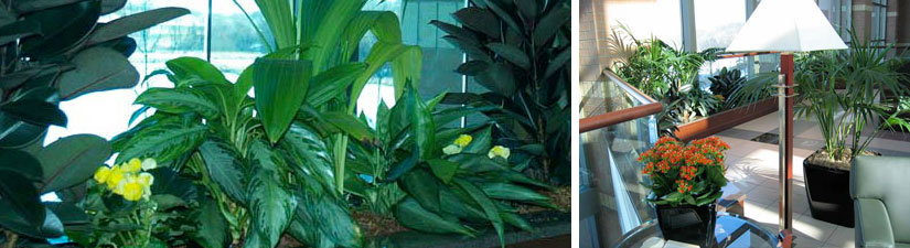 product indoor plant header